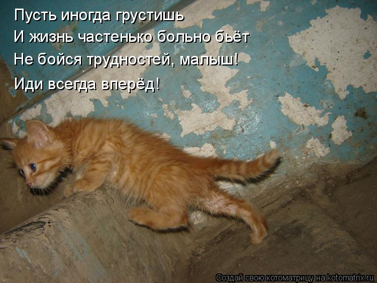 Котоматрица: Пусть иногда грустишь  И жизнь частенько больно бьёт Не бойся трудностей, малыш! Иди всегда вперёд!