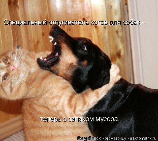 Котоматрица: Специальный отпугиватель котов для собак -  теперь с запахом мусора!