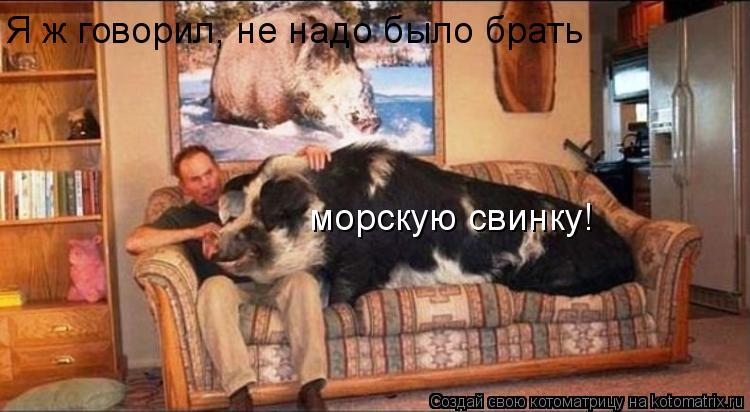 Котоматрица: Я ж говорил, не надо было брать морскую свинку!