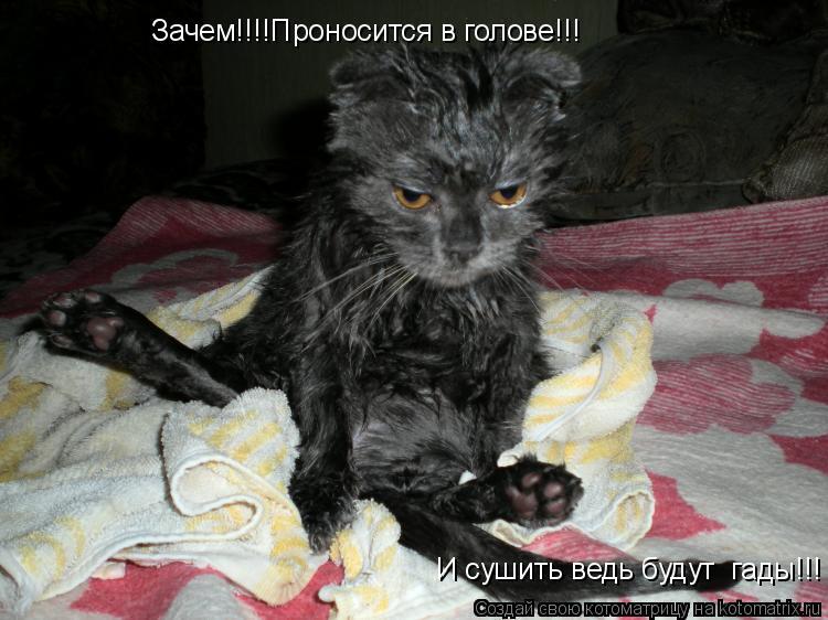 Котоматрица: Зачем!!!!Проносится в голове!!!  И сушить ведь будут  гады!!!