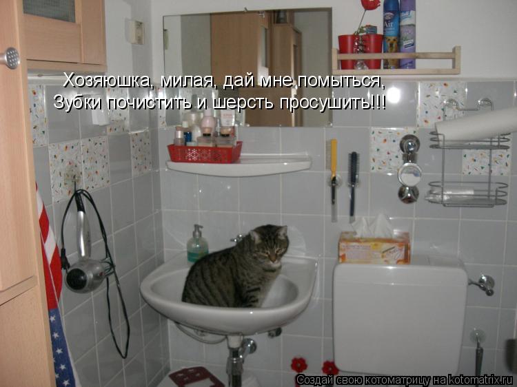 Котоматрица: Хозяюшка, милая, дай мне помыться,  Зубки почистить и шерсть просушить!!!