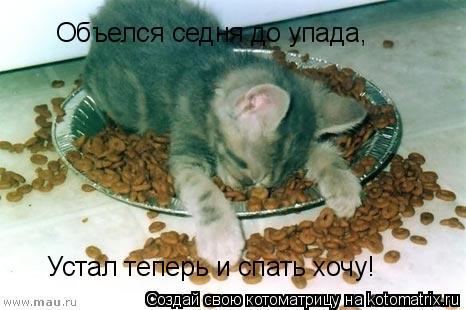 Котоматрица: Объелся седня до упада, Устал теперь и спать хочу!