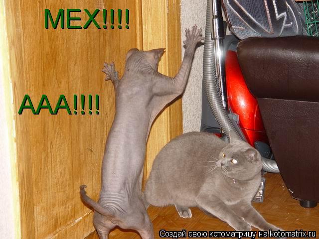 Котоматрица: МЕХ!!!! ААА!!!!