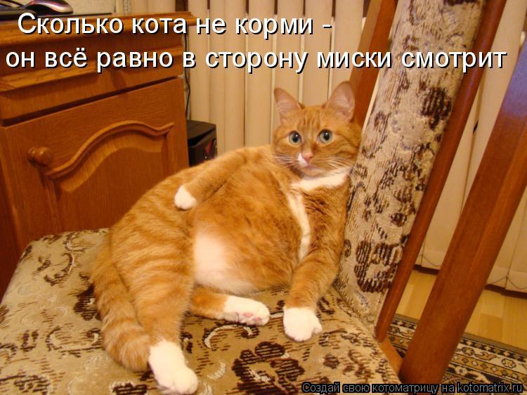 Котоматрица: Сколько кота не корми - он всё равно в сторону миски смотрит