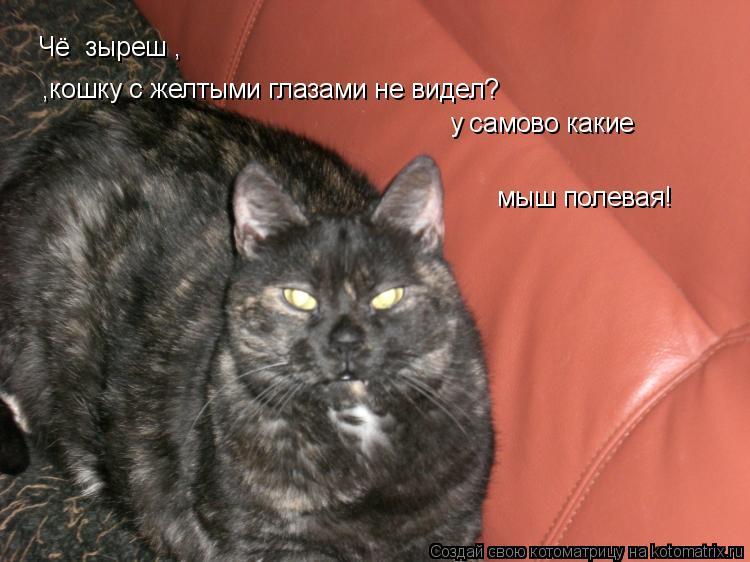 Котоматрица: Чё  зыреш , кошку с жёлтыми глазами не видел а?! а у самово какие мыш полевая Чё  зыреш ,  ,кошку с желтыми глазами не видел? у самово какие  мыш п