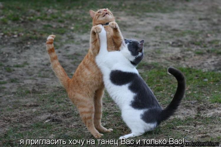 Котоматрица: я пригласить хочу на танец Вас и только Вас!...