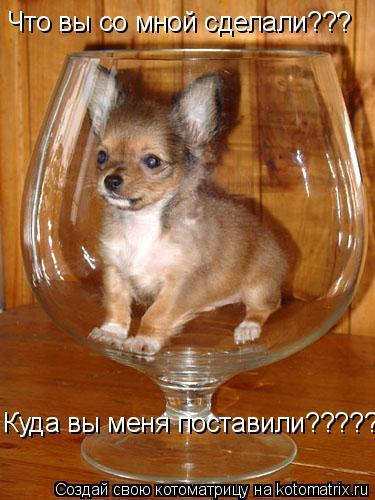 Котоматрица: Что вы со мной сделали??? Куда вы меня поставили??????????????