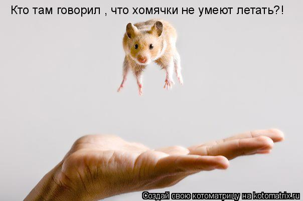 Котоматрица: Кто там говорил , что хомячки не умеют летать?!