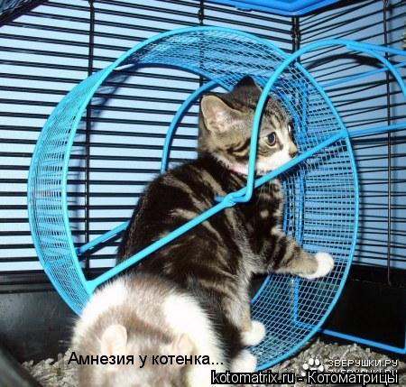 Котоматрица: Амнезия у котенка...