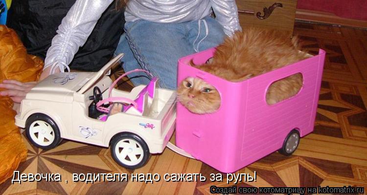 Котоматрица: Девочка , водителя надо сажать за руль!