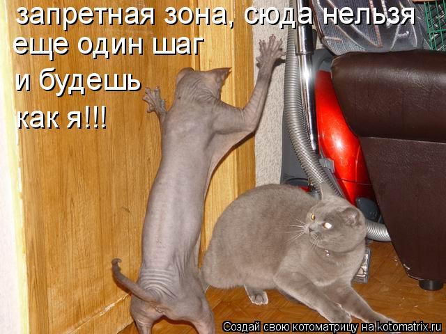 Котоматрица: запретная зона, сюда нельзя еще один шаг и будешь как я!!!