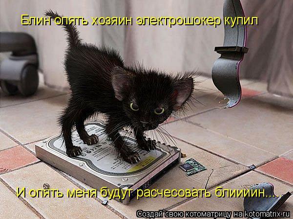 Котоматрица: Блин опять хозяин электрошокер купил И опять меня будут расчесовать блиииин.....