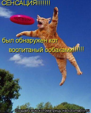 Котоматрица: СЕНСАЦИЯ!!!!!!! был обнаружен кот  воспитаный собаками !!!!!!