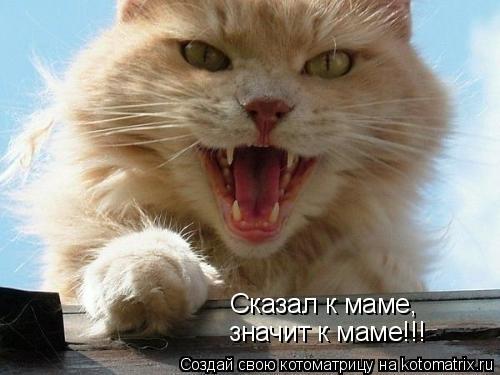 Котоматрица: Сказал к маме, значит к маме!!!