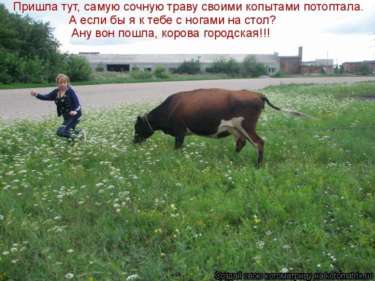 Котоматрица: Пришла тут, самую сочную траву своими копытами потоптала. А если бы я к тебе с ногами на стол? Ану вон пошла, корова городская!!!