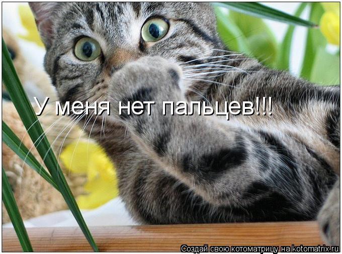 Котоматрица: У меня нет пальцев!!!
