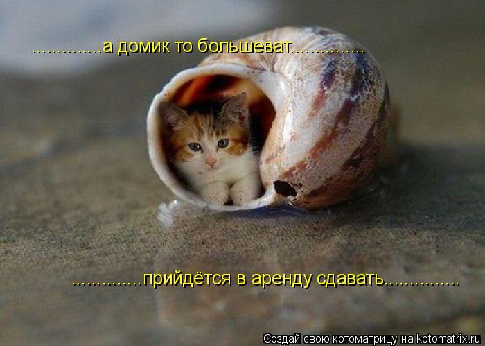 Котоматрица: ..............а домик то большеват............... ..............прийдётся варенду сдавать............... ..............прийдётся в аренду сдавать.....
