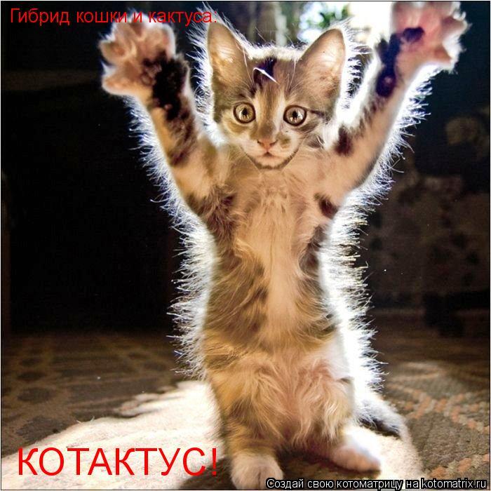 Котоматрица: Гибрид кошки и кактуса: КОТАКТУС!