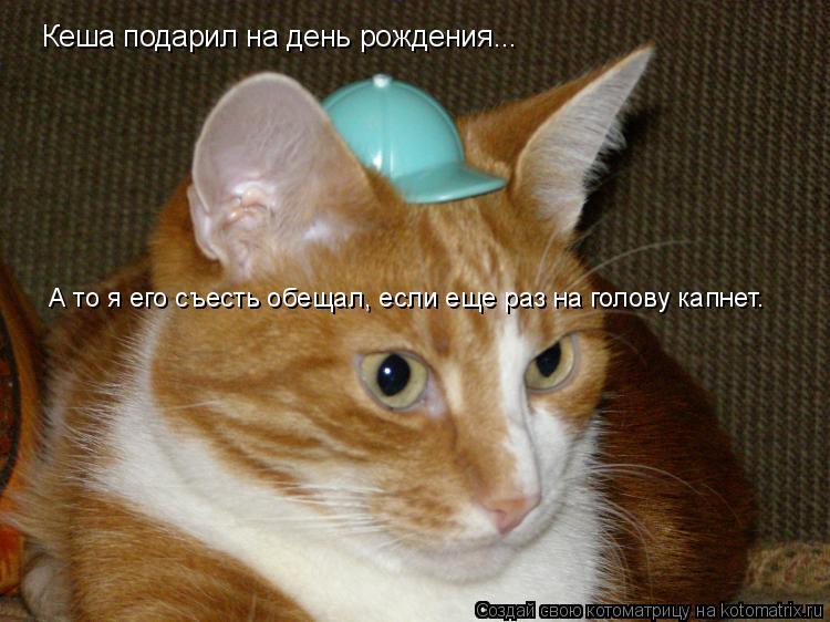 Котоматрица: Кеша подарил на день рождения... А то я его съесть обещал, если еще раз на голову капнет.