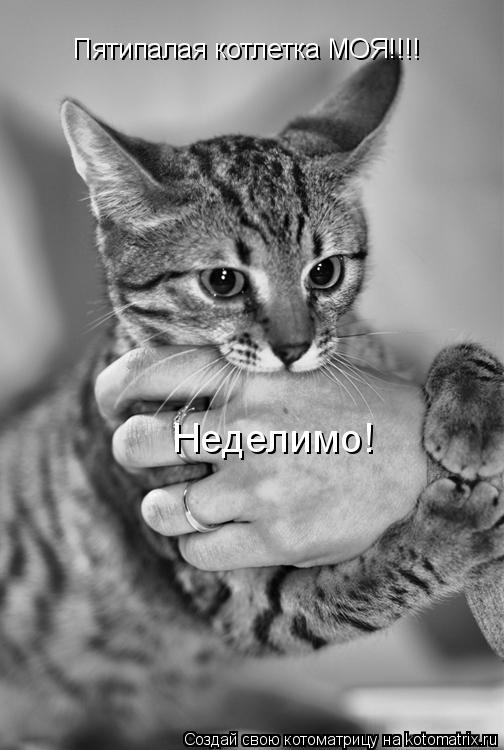 Котоматрица: Пятипалая котлетка МОЯ!!!! Неделимо!