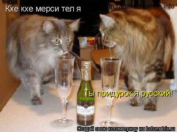 Котоматрица: Кхе кхе мерси тел я Ты придурок я русский!