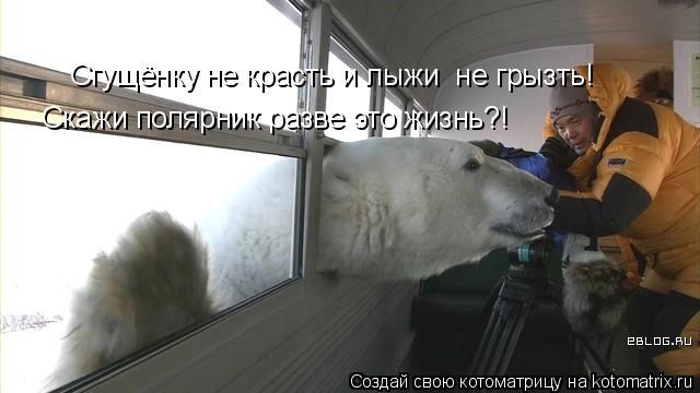 Котоматрица: Сгущёнку не красть и лыжи  не грызть! Скажи полярник разве это жизнь?!
