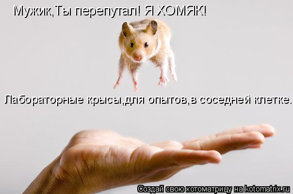 Котоматрица: Мужик,Ты перепутал! Я ХОМЯК! Лабораторные крысы,для опытов,в соседней клетке.