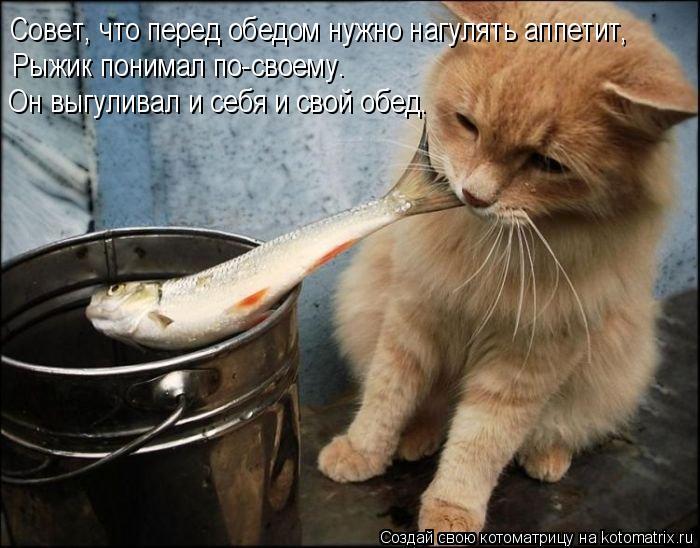 Котоматрица: Совет, что перед обедом нужно нагулять аппетит,  Рыжик понимал по-своему.  Он выгуливал и себя и свой обед.