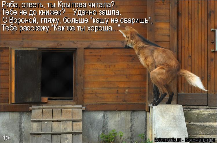 """Котоматрица: Ряба, ответь, ты Крылова читала? Тебе не до книжек?... Удачно зашла. С Вороной, гляжу, больше """"кашу не сваришь"""", Тебе расскажу:""""Как же ты хороша..."""""""