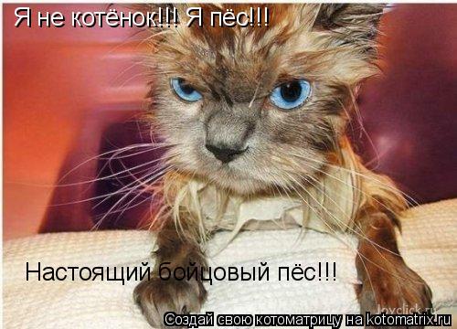 Котоматрица: Я не котёнок!!! Я пёс!!! Настоящий бойцовый пёс!!!