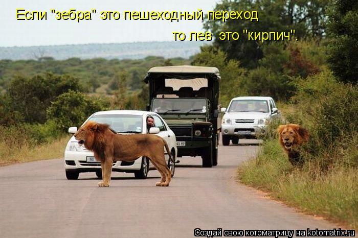 """Котоматрица: Если """"зебра"""" это пешеходный переход то лев  это """"кирпич""""."""