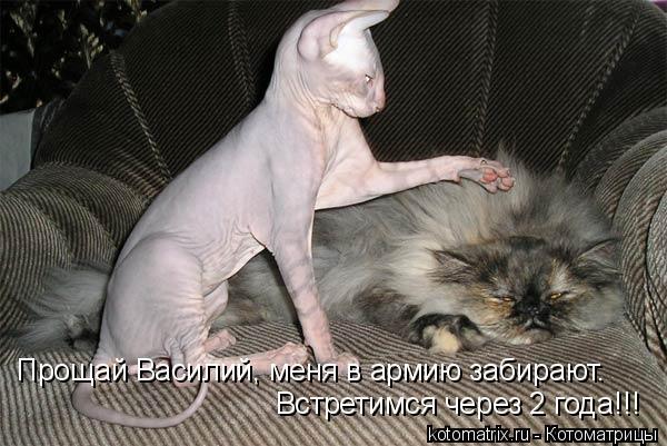 Котоматрица: Прощай Василий, меня в армию забирают. Встретимся через 2 года!!!
