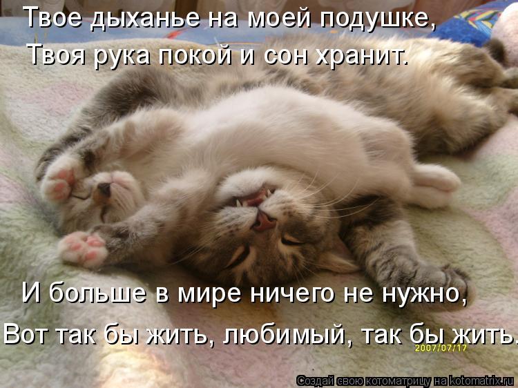 Котоматрица: Твое дыханье на моей подушке, Твоя рука покой и сон хранит. И больше в мире ничего не нужно, Вот так бы жить, любимый, так бы жить.