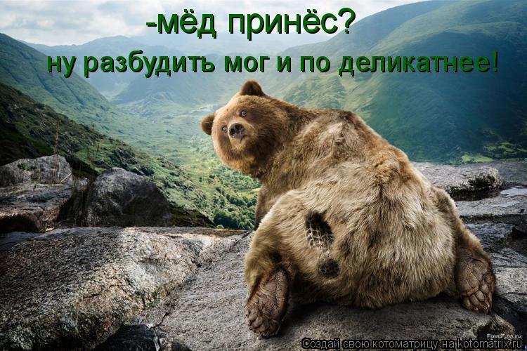 Котоматрица: -мёд принёс? ну разбудить мог и по деликатнее!