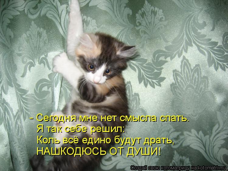Котоматрица: - Сегодня мне нет смысла спать. Я так себе решил: Коль всё едино будут драть, НАШКОДЮСЬ ОТ ДУШИ!