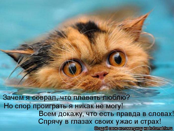Котоматрица: Но спор проиграть я никак не могу! Всем докажу, что есть правда в словах! Спрячу в глазах своих ужас и страх! Зачем я соврал, что плавать люблю
