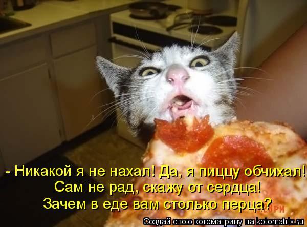 Котоматрица: - Никакой я не нахал! Да, я пиццу обчихал! Сам не рад, скажу от сердца! Зачем в еде вам столько перца?