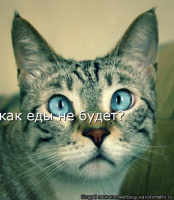 Котоматрица: смотри мне в глаза смотри мне в глаза как еды не будет?