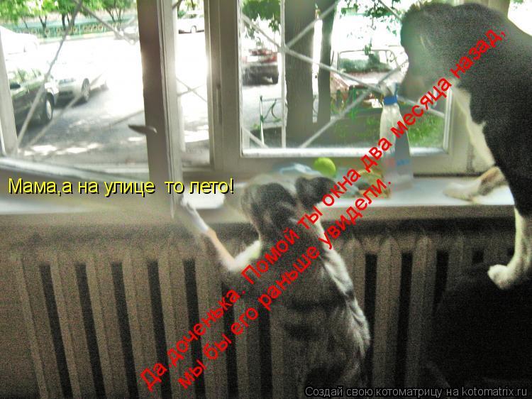 Котоматрица: Мама,а на улице  то лето! Да.доченька. Помой ты окна два месяца назад, мы бы его раньше увидели.