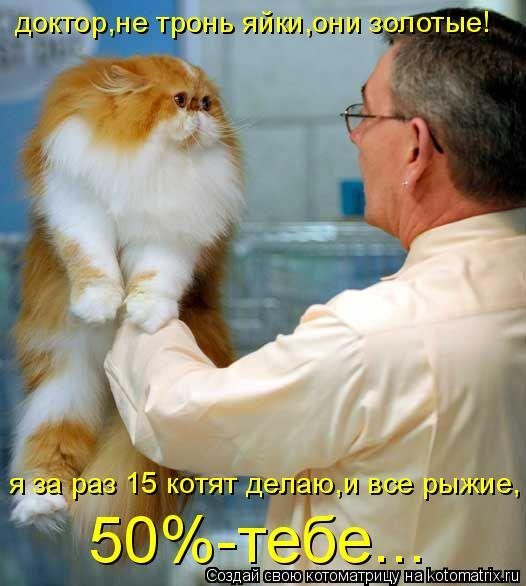Котоматрица: доктор,не тронь яйки,они золотые! я за раз 15 котят делаю,и все рыжие, 50%-тебе...