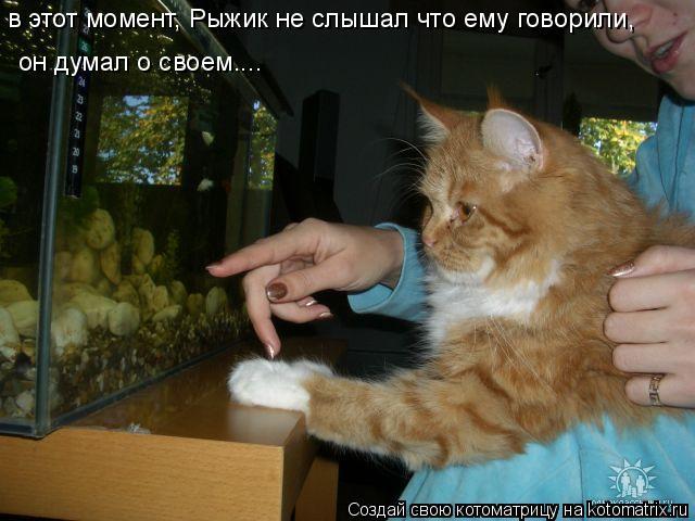 Котоматрица: в этот момент, Рыжик не слышал что ему говорили, он думал о своем....