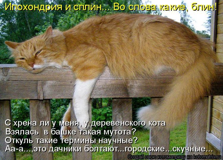 Котоматрица: Откуль такие термины научные? Взялась  в башке такая мутота? С хрена ли у меня, у деревенского кота Ипохондрия и сплин... Во слова какие, блин!