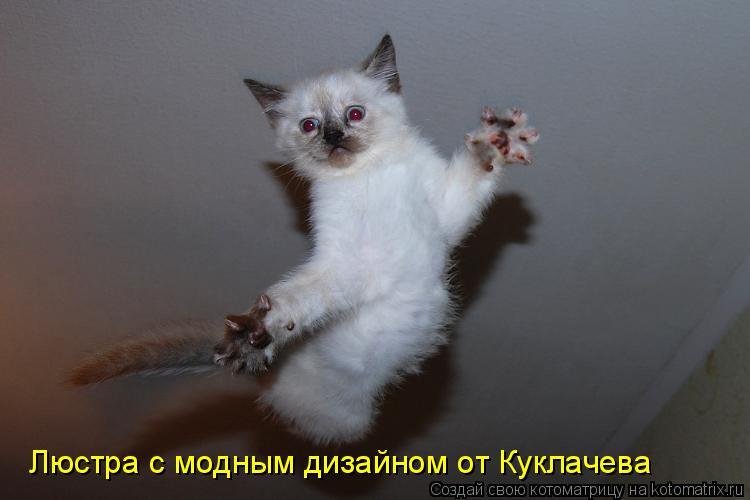 Котоматрица: Люстра с модным дизайном от Куклачева