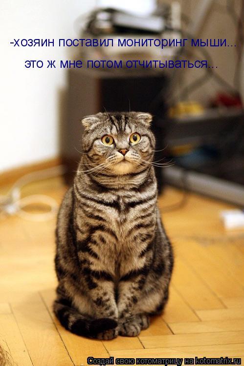 Котоматрица: -хозяин поставил мониторинг мыши... это ж мне потом отчитываться...