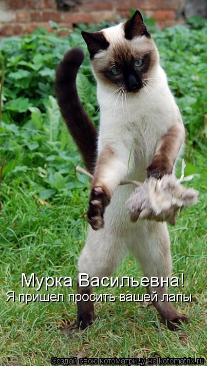 Котоматрица: Мурка Васильевна!  Я пришел просить вашей лапы