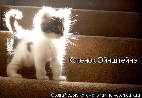 Котоматрица: Котенок Эйнштейна