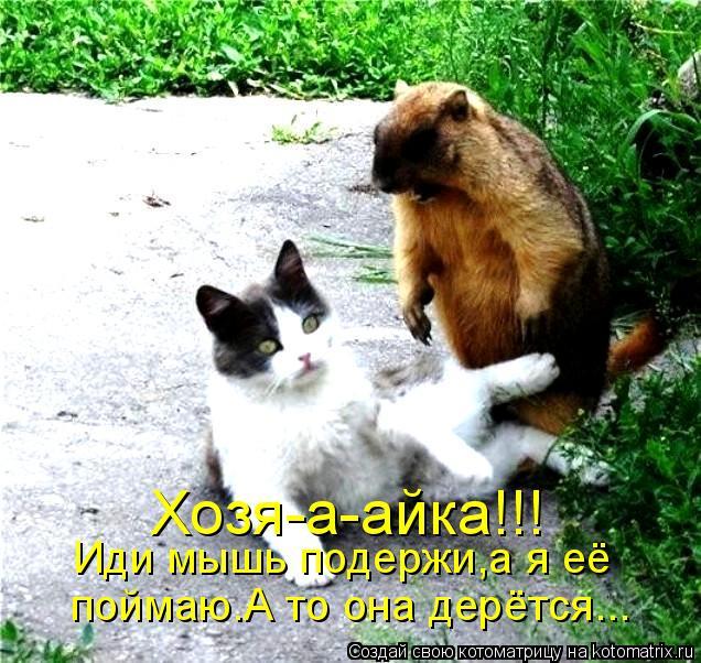 Котоматрица: Хозя-а-айка!!! Иди мышь подержи,а я её поймаю.А то она дерётся...