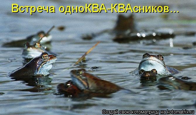 Котоматрица: Встреча одноКВА-КВАсников...
