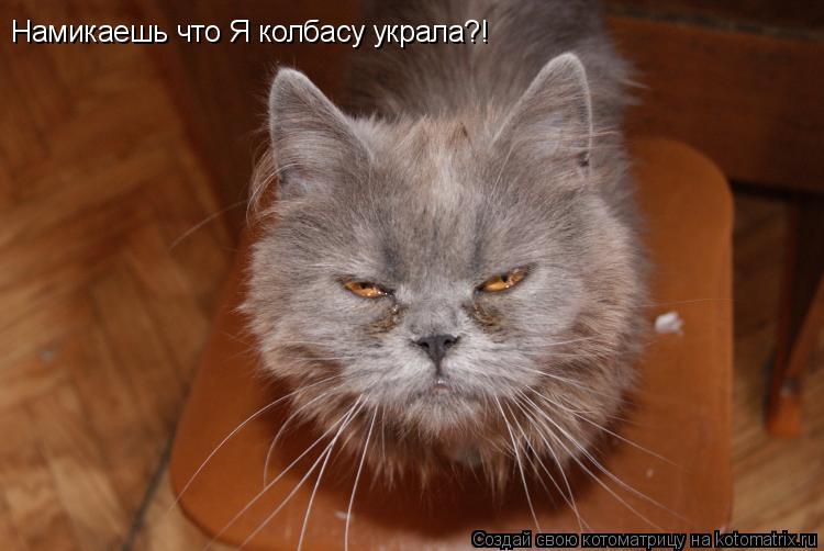 Котоматрица: Намикаешь что Я колбасу украла?!