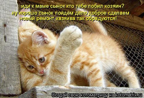 Котоматрица: иди к маме сынок кто тебе побил хозяин?  ну хорошо сынок пойдём дело доброе сделаем  новый ремонт хазяива так обрадуются!